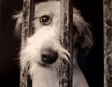 Como denunciar maltrato animal en Argentina / AnimaNaturalis