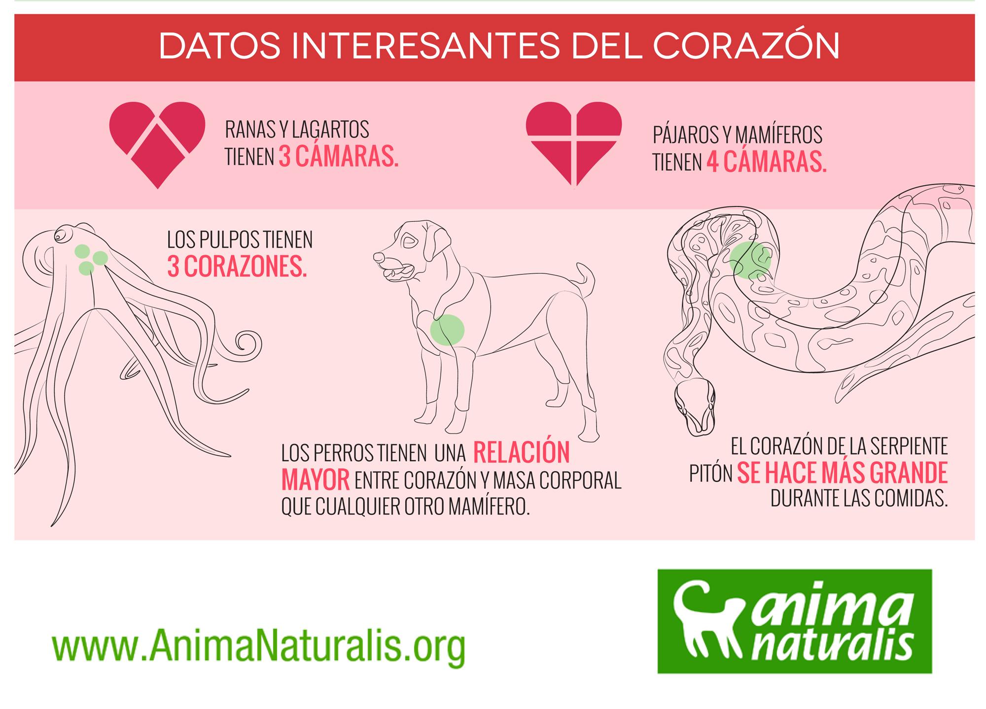 San Valentín Algunos Animales Sí Que Tienen Corazón Animanaturalis