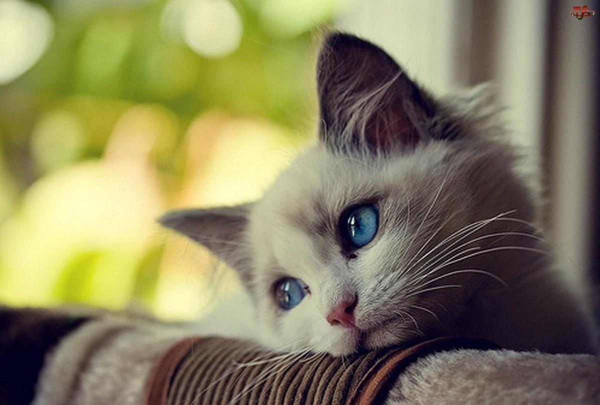 Sientes El Amor De Los Gatos Animanaturalis Animanaturalis