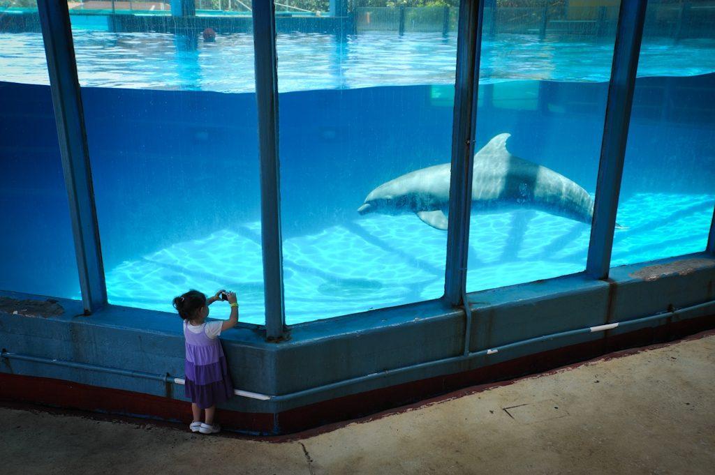 Canadá prohíbe el cautiverio de delfines, ballenas y belugas