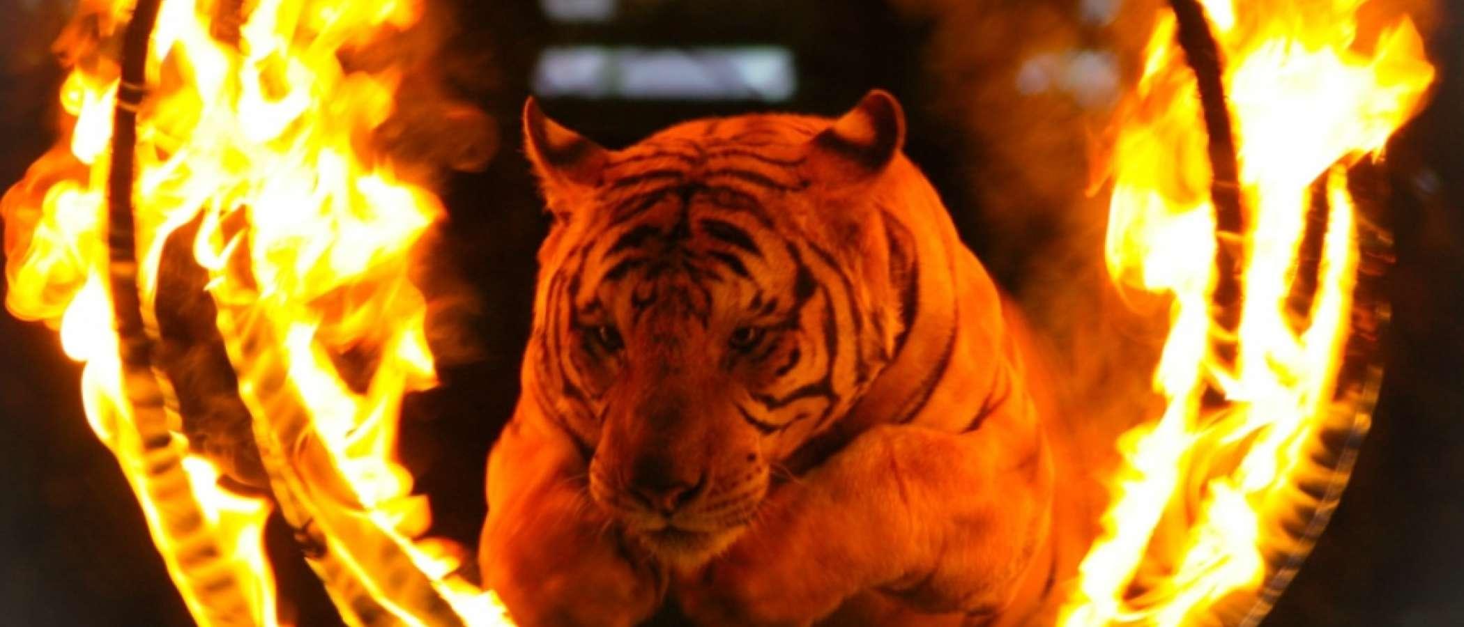 En Madrid no habrá más circos con animales salvajes desde abril