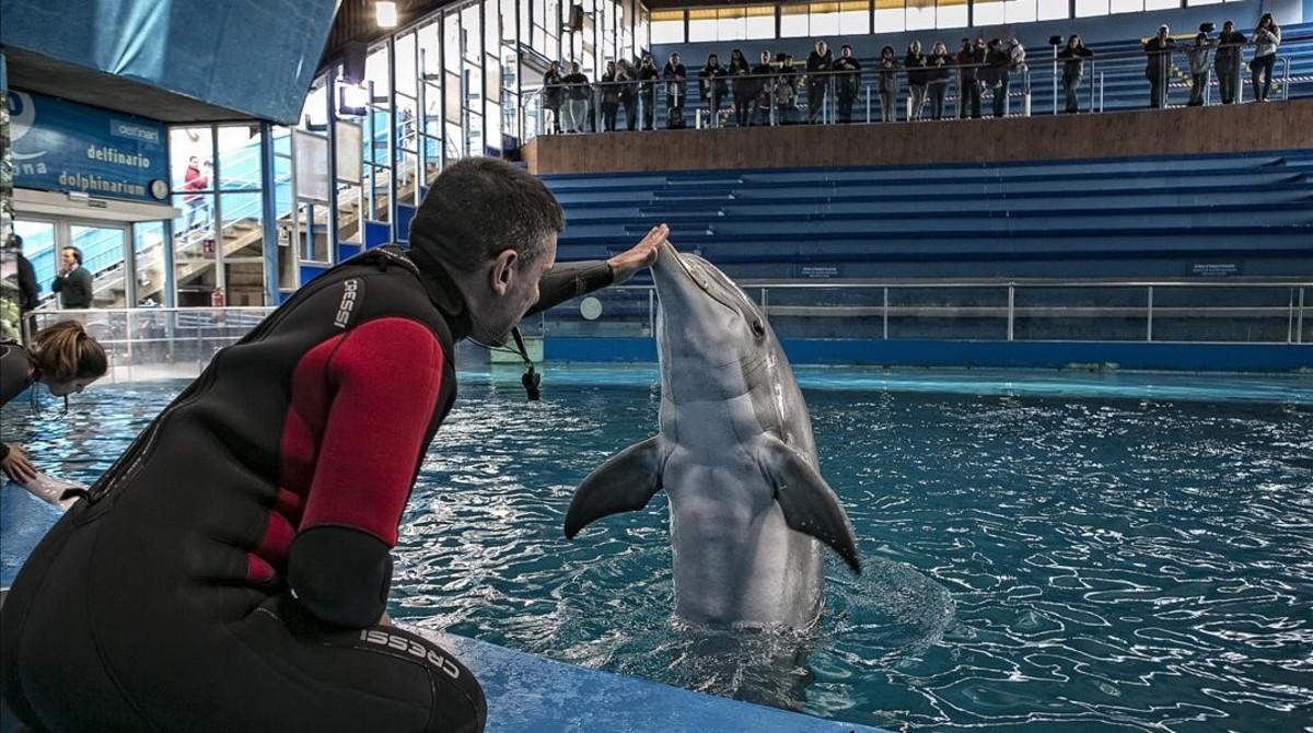 ¡Histórico! El Zoo de Barcelona cierra su delfinario