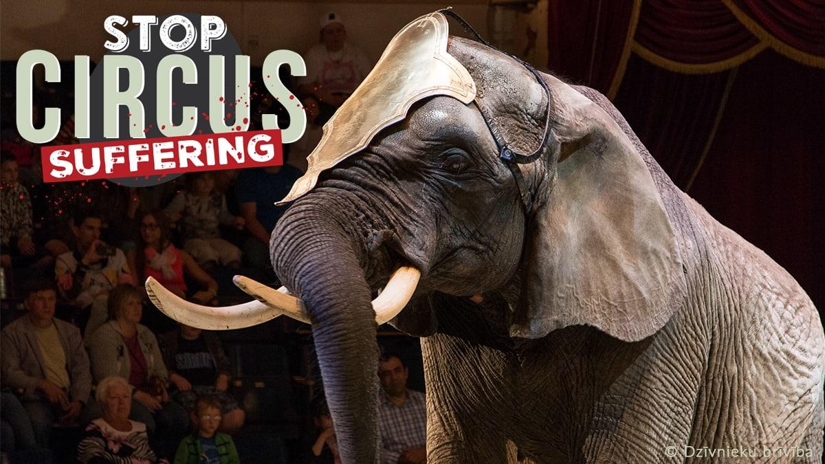 ONG´s pedimos a la Unión Europea la prohibición de los circos con animales salvajes